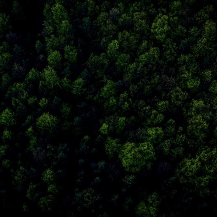 Photo forêt boréale