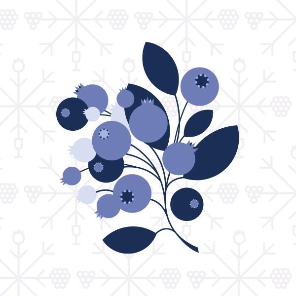 Illustration   Bleuet